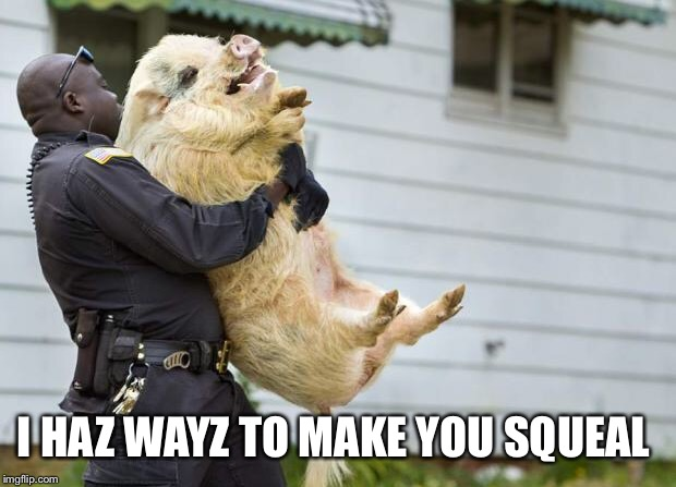 arrested pig | I HAZ WAYZ TO MAKE YOU SQUEAL | image tagged in arrested pig | made w/ Imgflip meme maker