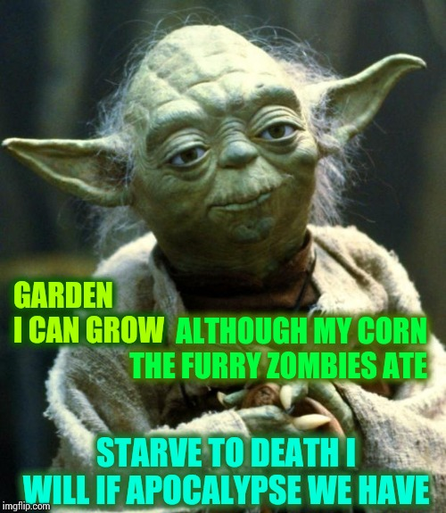 Racoons, Opossums, Skunks, Groundhogs, Deer And Rabbits ... Children Of The Corn They Are |  ALTHOUGH MY CORN THE FURRY ZOMBIES ATE; GARDEN I CAN GROW; STARVE TO DEATH I WILL IF APOCALYPSE WE HAVE | image tagged in memes,star wars yoda,gardening,children of the corn,the horror,i'm not saying i hate you | made w/ Imgflip meme maker
