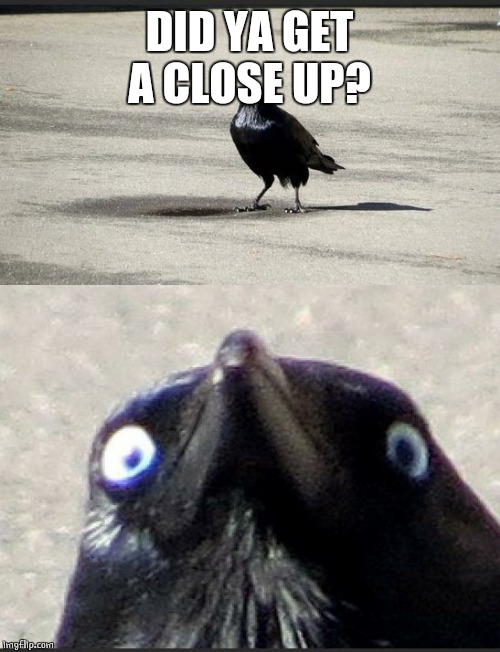 insanity crow | DID YA GET A CLOSE UP? | image tagged in insanity crow | made w/ Imgflip meme maker