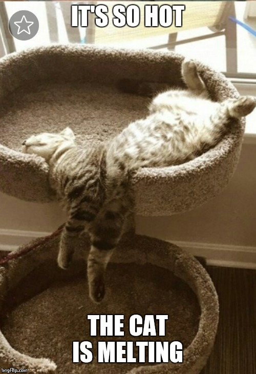 TOO HOT | IT'S SO HOT THE CAT IS MELTING | image tagged in cats,cat,memes,funny,cute cat | made w/ Imgflip meme maker