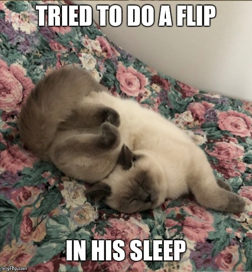 SLEEPY KITTY | TRIED TO DO A FLIP IN HIS SLEEP | image tagged in cats,funny,cat,memes,cute cat | made w/ Imgflip meme maker
