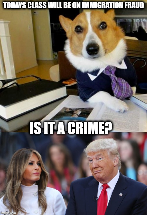 Chain Migration | TODAYS CLASS WILL BE ON IMMIGRATION FRAUD IS IT A CRIME? | image tagged in lawyer corgi dog,donald and melania trump,illegal immigration,maga,politics | made w/ Imgflip meme maker