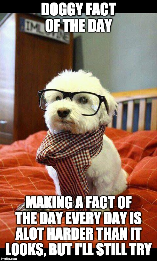 Doggy fact of the day 3 | DOGGY FACT OF THE DAY MAKING A FACT OF THE DAY EVERY DAY IS ALOT HARDER THAN IT LOOKS, BUT I'LL STILL TRY | image tagged in memes,intelligent dog,fact of the day | made w/ Imgflip meme maker