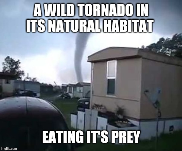 A WILD TORNADO IN ITS NATURAL HABITAT EATING IT'S PREY | image tagged in trailer park,tornado | made w/ Imgflip meme maker