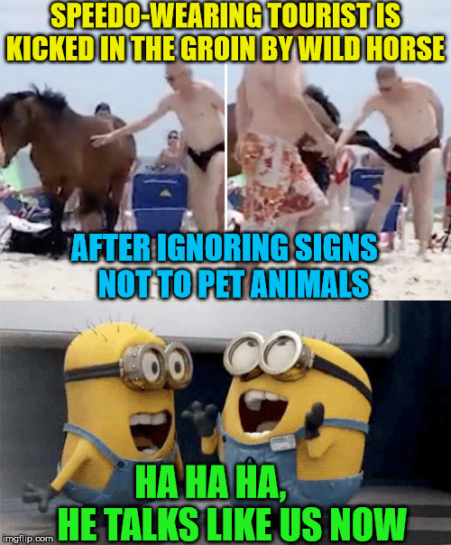 He won't do that again! | SPEEDO-WEARING TOURIST IS KICKED IN THE GROIN BY WILD HORSE HA HA HA,            HE TALKS LIKE US NOW AFTER IGNORING SIGNS     NOT TO PET AN | image tagged in memes,excited minions,sad guy on the beach,signs,one does not simply | made w/ Imgflip meme maker