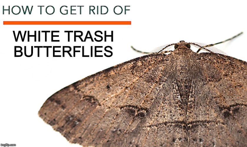 White Trash Butterflies | WHITE TRASH BUTTERFLIES | image tagged in moths | made w/ Imgflip meme maker