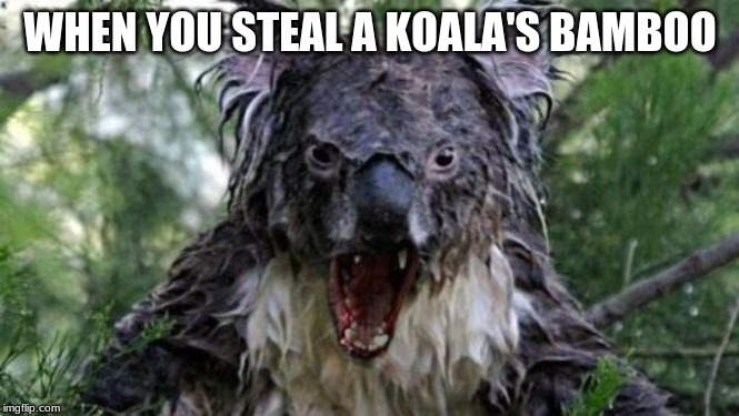 Don't mess with the Koala |  WHEN YOU STEAL A KOALA'S BAMBOO | image tagged in memes,koala,bamboo | made w/ Imgflip meme maker
