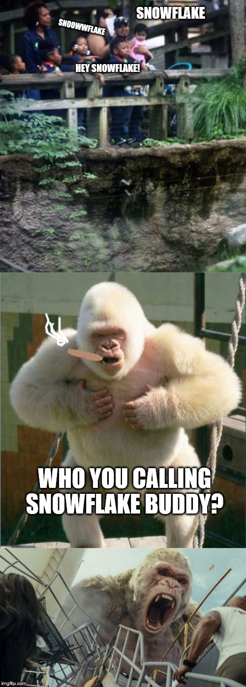 Meanwhile, in Snowflake's enclosure.. | SNOWFLAKE SNOOWWFLAKE HEY SNOWFLAKE! WHO YOU CALLING SNOWFLAKE BUDDY? | image tagged in white gorilla,snowflake | made w/ Imgflip meme maker