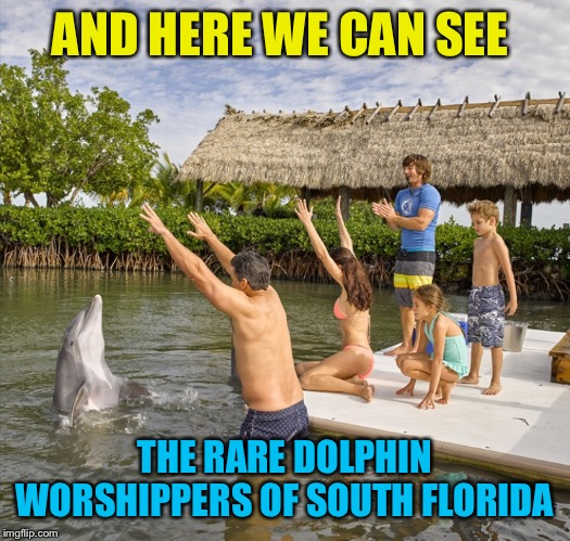 Dolphintology | AND HERE WE CAN SEE THE RARE DOLPHIN WORSHIPPERS OF SOUTH FLORIDA | image tagged in dolphin,worship,florida,funny memes | made w/ Imgflip meme maker