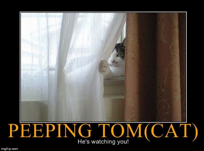 I got my eye on you. | image tagged in peeping tom,cats | made w/ Imgflip meme maker