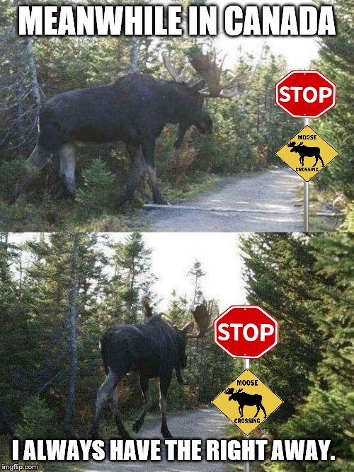 meanwhile in Canada | MEANWHILE IN CANADA I ALWAYS HAVE THE RIGHT AWAY. | image tagged in moose crossing,meanwhile in canada,memes,funny animals,moose | made w/ Imgflip meme maker