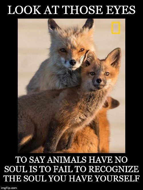 Look and See | LOOK AT THOSE EYES TO SAY ANIMALS HAVE NO SOUL IS TO FAIL TO RECOGNIZE THE SOUL YOU HAVE YOURSELF | image tagged in foxes,soul,eyes,recognize,yourself | made w/ Imgflip meme maker