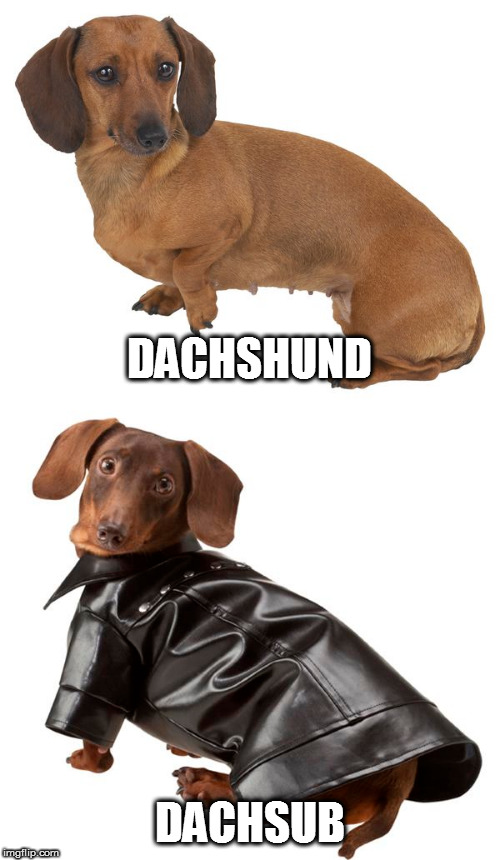 I couldn't decide which one to do, so I just did both - part 2 | DACHSHUND DACHSUB | image tagged in memes,dachshunds | made w/ Imgflip meme maker