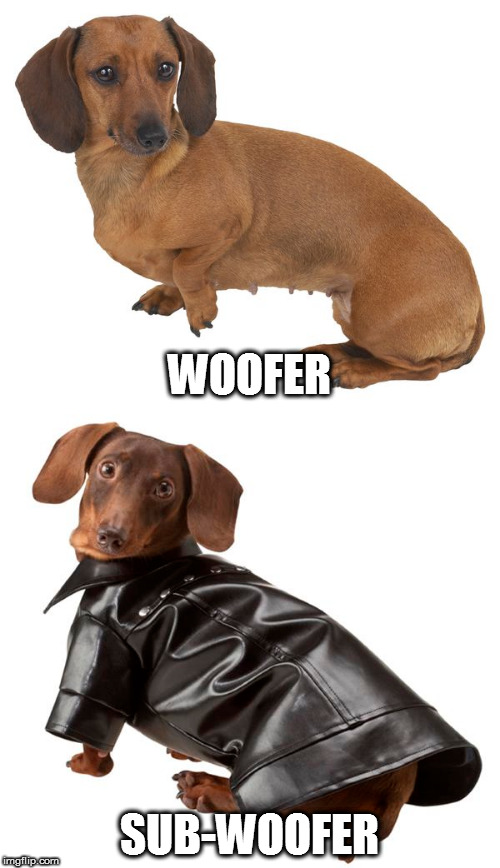 I couldn't decide which one to do, so I just did both - part 1 | WOOFER SUB-WOOFER | image tagged in memes,dachshunds | made w/ Imgflip meme maker