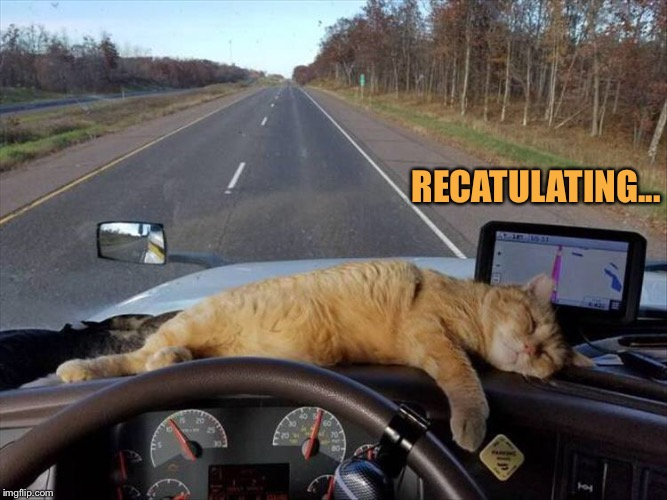 We're headed to the Catskills. | RECATULATING... | image tagged in cats,gps,memes,funny | made w/ Imgflip meme maker