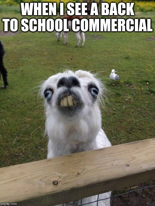 Llama weird face  |  WHEN I SEE A BACK TO SCHOOL COMMERCIAL | image tagged in llama weird face | made w/ Imgflip meme maker