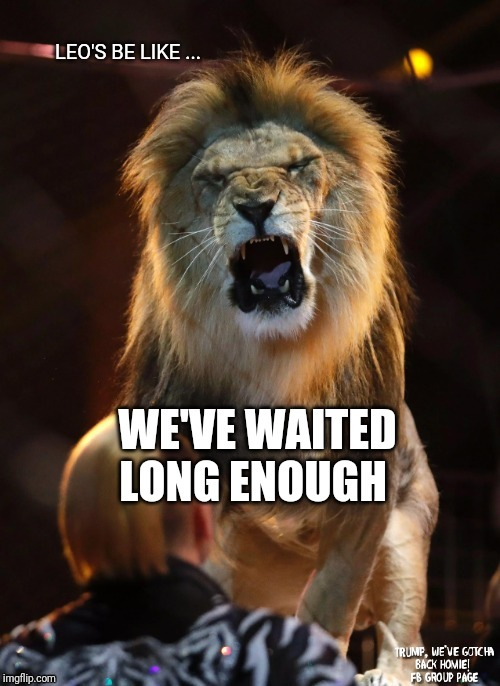 LEO'S BE LIKE.... WE'VE WAITED LONG ENOUGH | image tagged in leo season,august,birthday,lion,meme,july | made w/ Imgflip meme maker