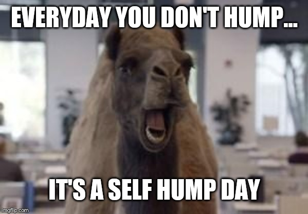 Hump Day Camel | EVERYDAY YOU DON'T HUMP... IT'S A SELF HUMP DAY | image tagged in hump day camel | made w/ Imgflip meme maker