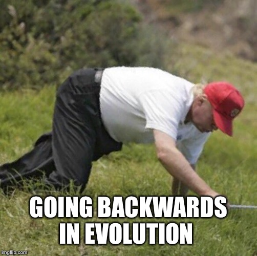 trump crawling | GOING BACKWARDS IN EVOLUTION | image tagged in trump crawling,memes | made w/ Imgflip meme maker