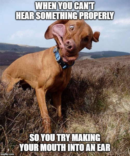 WHEN YOU CAN'T HEAR SOMETHING PROPERLY SO YOU TRY MAKING YOUR MOUTH INTO AN EAR | image tagged in dog,dogs | made w/ Imgflip meme maker