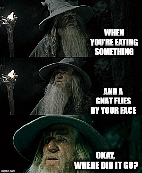 PLEASE tell me it didn't land in my bowl of broccoli! | WHEN YOU'RE EATING SOMETHING AND A GNAT FLIES BY YOUR FACE OKAY,  WHERE DID IT GO? | image tagged in memes,confused gandalf | made w/ Imgflip meme maker