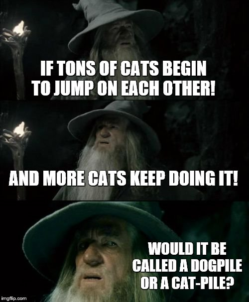 Dogpile on Gandalfs Question! | IF TONS OF CATS BEGIN TO JUMP ON EACH OTHER! AND MORE CATS KEEP DOING IT! WOULD IT BE CALLED A DOGPILE OR A CAT-PILE? | image tagged in confused gandalf,bad pun dogs,unexpected results,kill you cat,so true | made w/ Imgflip meme maker
