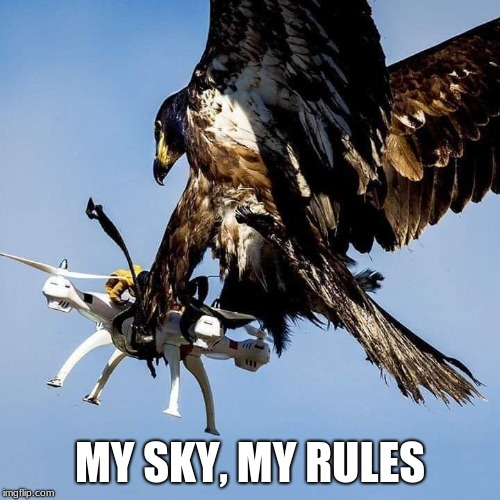 When Nature protects your privacy | MY SKY, MY RULES | image tagged in privacy,my sky my rules,patriotic eagle,own the sky,drone,go eagle go | made w/ Imgflip meme maker
