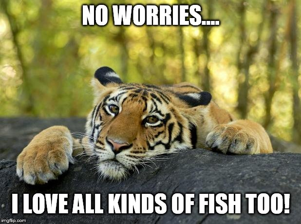 Confession Tiger | NO WORRIES.... I LOVE ALL KINDS OF FISH TOO! | image tagged in confession tiger | made w/ Imgflip meme maker