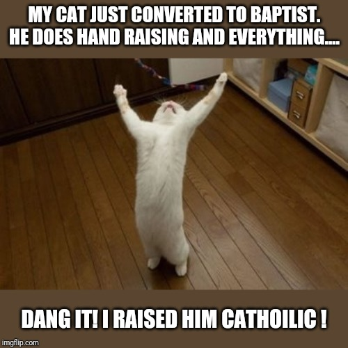 Why Why Why Funny Cat | MY CAT JUST CONVERTED TO BAPTIST. HE DOES HAND RAISING AND EVERYTHING.... DANG IT! I RAISED HIM CATHOILIC ! | image tagged in why why why funny cat | made w/ Imgflip meme maker