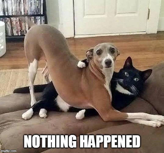 I SWEAR | NOTHING HAPPENED | image tagged in cats,funny,cat,dog | made w/ Imgflip meme maker