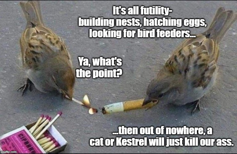 Existential Birds | It's all futility- building nests, hatching eggs, looking for bird feeders... ...then out of nowhere, a cat or Kestrel will just kill our as | image tagged in existentialism,birds | made w/ Imgflip meme maker