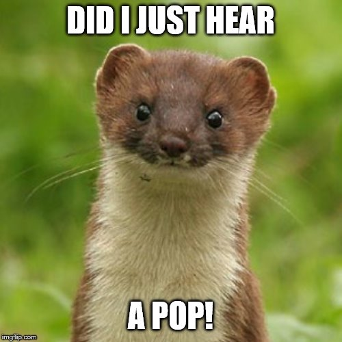 No Weason Weasel | DID I JUST HEAR A POP! | image tagged in no weason weasel | made w/ Imgflip meme maker