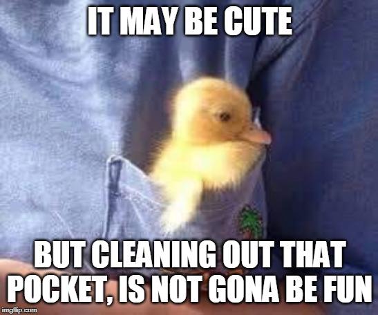 Ducks Ducks Memes Gifs Imgflip