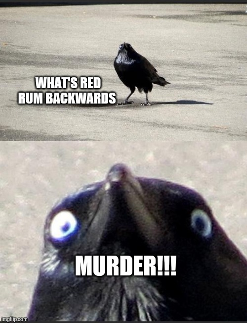 insanity crow | WHAT'S RED RUM BACKWARDS MURDER!!! | image tagged in insanity crow | made w/ Imgflip meme maker