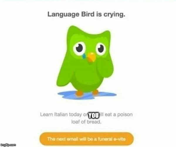 Duolingo bird | YOU | image tagged in duolingo bird | made w/ Imgflip meme maker