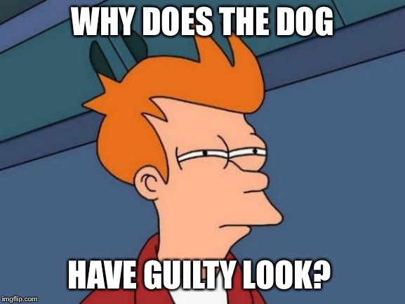 Futurama Fry Meme | WHY DOES THE DOG HAVE GUILTY LOOK? | image tagged in memes,futurama fry | made w/ Imgflip meme maker