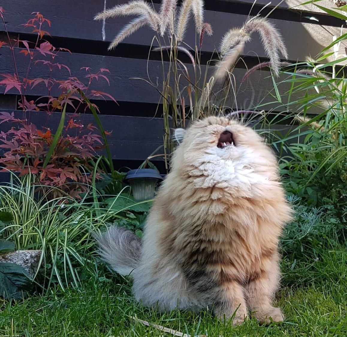 Singing Cat Blank Template Imgflip
