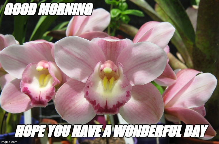 Good morning | GOOD MORNING HOPE YOU HAVE A WONDERFUL DAY | image tagged in good morning flowers | made w/ Imgflip meme maker