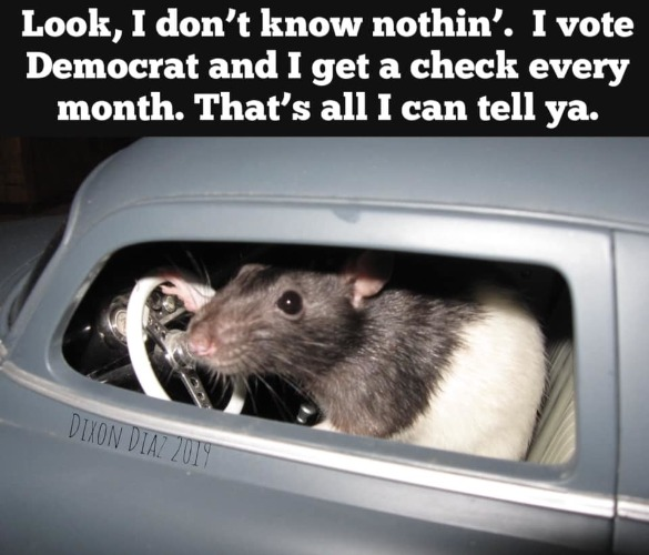 Speaking of rats, this one was seen driving around Baltimore earlier this evening. | image tagged in baltimore,rats,democratic party,democratic socialism,progressives,liberal hypocrisy | made w/ Imgflip meme maker
