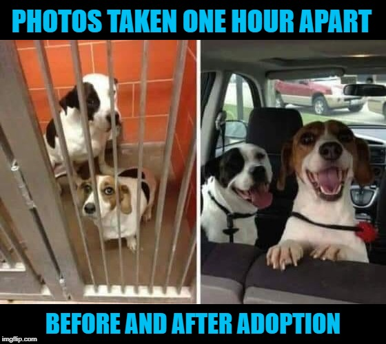 What a difference an hour makes! | PHOTOS TAKEN ONE HOUR APART BEFORE AND AFTER ADOPTION | image tagged in one hour,memes,adoption day,dogs,goin' home,we're free | made w/ Imgflip meme maker