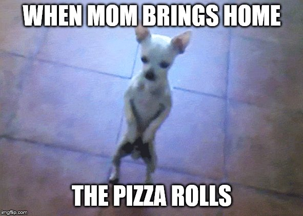 Dog dancing | WHEN MOM BRINGS HOME THE PIZZA ROLLS | image tagged in dogs,dancing,pizza rolls | made w/ Imgflip meme maker