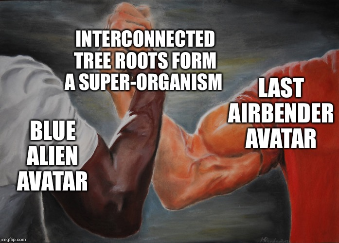 Yes *that Avatar | BLUE ALIEN AVATAR LAST AIRBENDER AVATAR INTERCONNECTED TREE ROOTS FORM A SUPER-ORGANISM | image tagged in hand clasping,avatar the last airbender,avatar,blue aliens,swamp,pandora | made w/ Imgflip meme maker