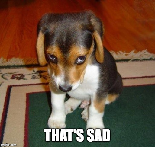 Sad puppy | THAT'S SAD | image tagged in sad puppy | made w/ Imgflip meme maker