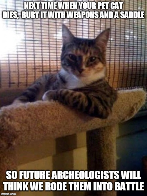 The Most Interesting Cat In The World Meme - Imgflip