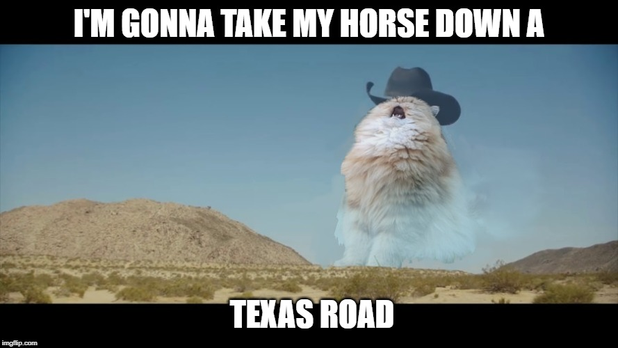 I'M GONNA TAKE MY HORSE DOWN A TEXAS ROAD | image tagged in ride,texas,cat | made w/ Imgflip meme maker