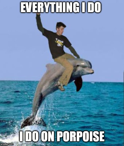 EVERYTHING I DO I DO ON PORPOISE | image tagged in dolphin | made w/ Imgflip meme maker