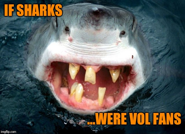 Vol Shark | IF SHARKS ...WERE VOL FANS | image tagged in alabama football,tennessee,funny animals,funny meme | made w/ Imgflip meme maker