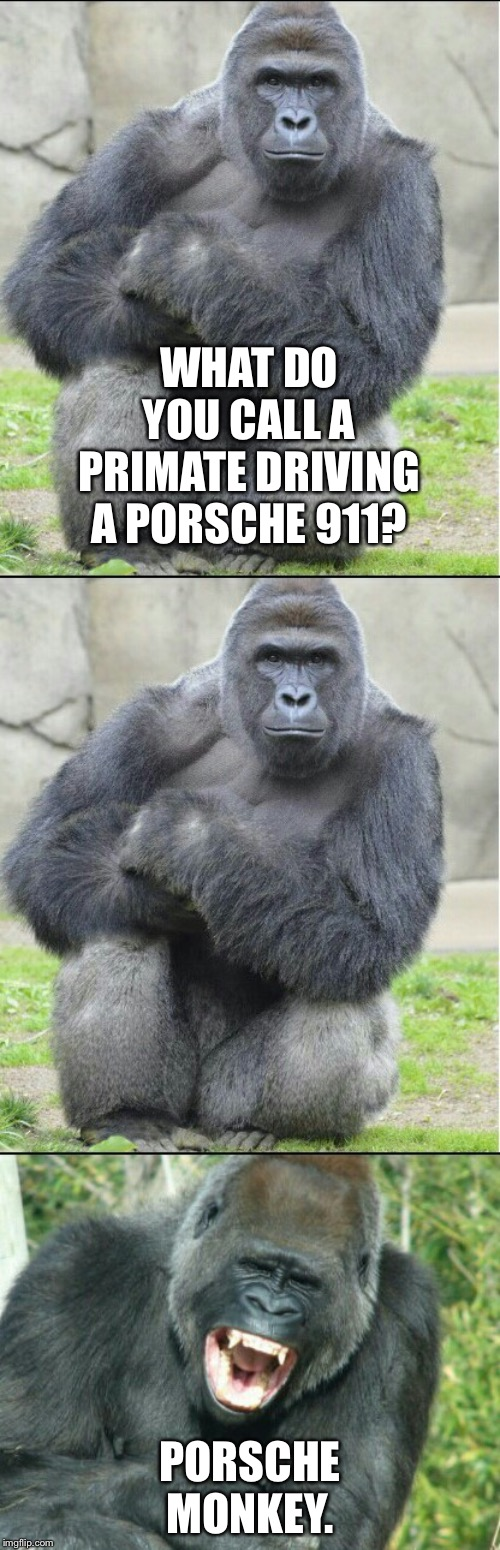 Here is a joke about race. Try to keep up. | WHAT DO YOU CALL A PRIMATE DRIVING A PORSCHE 911? PORSCHE MONKEY. | image tagged in bad joke gorilla,funny memes,race,porsche,monkey,driving | made w/ Imgflip meme maker