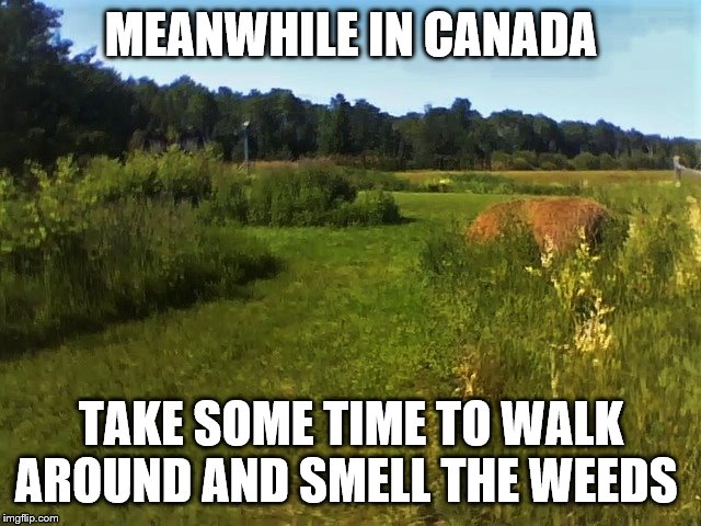 meanwhile in canada | MEANWHILE IN CANADA TAKE SOME TIME TO WALK AROUND AND SMELL THE WEEDS | image tagged in north western ontario,memes,canada,meanwhile in canada,weeds,farm | made w/ Imgflip meme maker