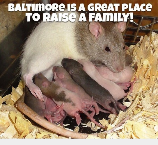 Baltimore is Great Place to Raise a Family! | image tagged in baltimore,shithole,democrats,democratic socialism,rats,rat race | made w/ Imgflip meme maker